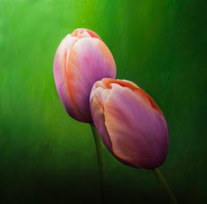Twee tulpen, 90 x 90 cm, olieverf op paneel