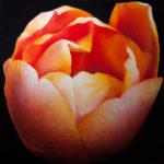 Close up van tulp, 90 x 90 cm-Inge Zwolle